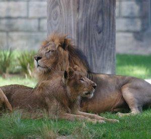 Abu Dhabi: 1-Night Stay with Zoo Tickets